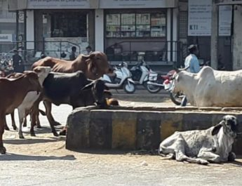 nashik seven years old boy injured stray animals city roads
