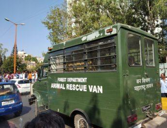 leopard sawarkar nagar forest department animal rescue van