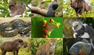 Adopt wild animals वन्य प्राण्यांना दत्तक घ्या; ही आहे सरकारी योजना